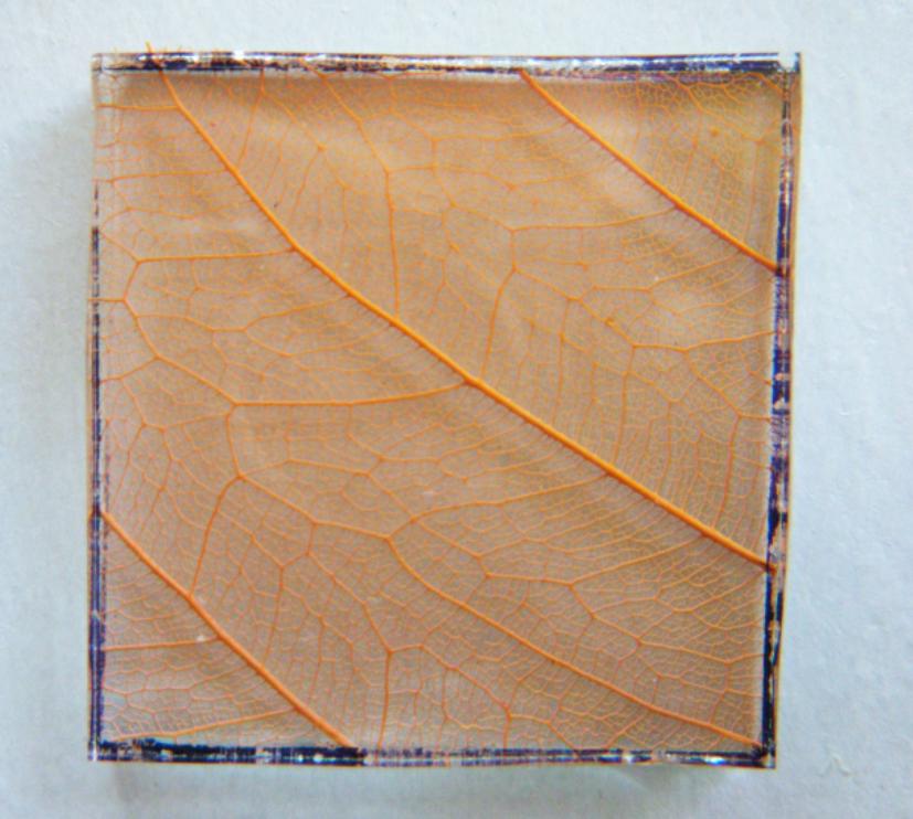 Barwy-szkla-2011-Zatrzymaj-jesien-2